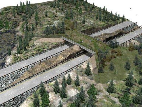Ontario opens first highway wildlife crossing