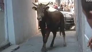 Video: Raging bull attacks traffic cop in street