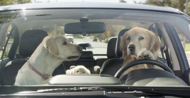 Meet the Barkleys: Subaru's dog family is the cutest thing since babies