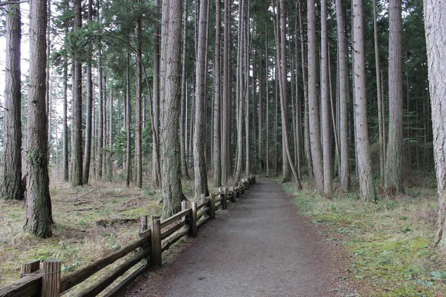 Rathtrevor Beach wooded path