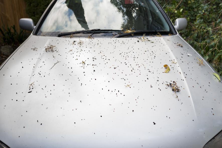 car hood covered in leaves