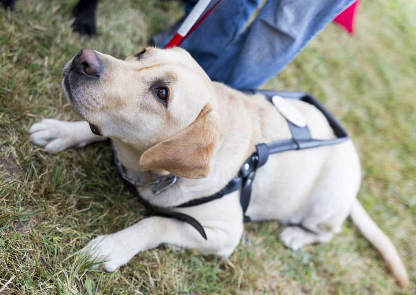 Auto Know Guide Dog