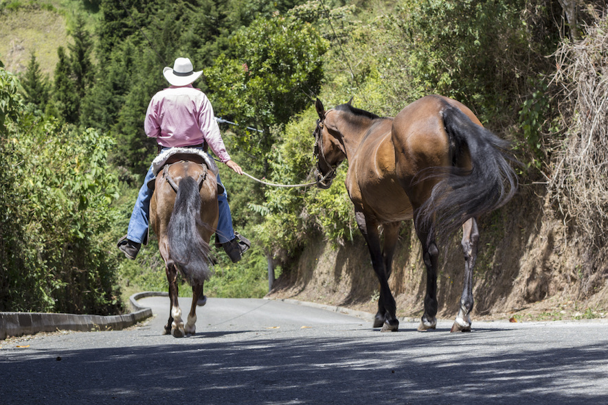 racing horse on the road is prohibited in canadian laws